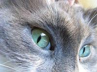 200pxcats_eyes_7